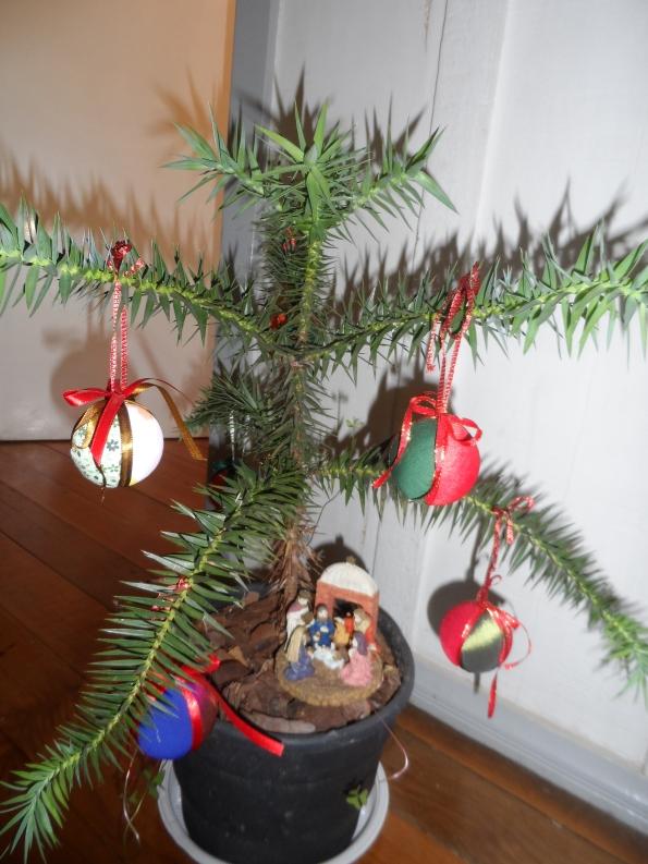 Araucária que plantei no vaso há um ano, para enfeitar no Natal com bolas feitas por mim em patchwork. FELIZ NATAL !!!!!