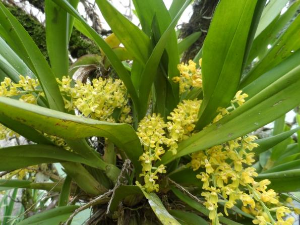 Orquídea do meu jardim.