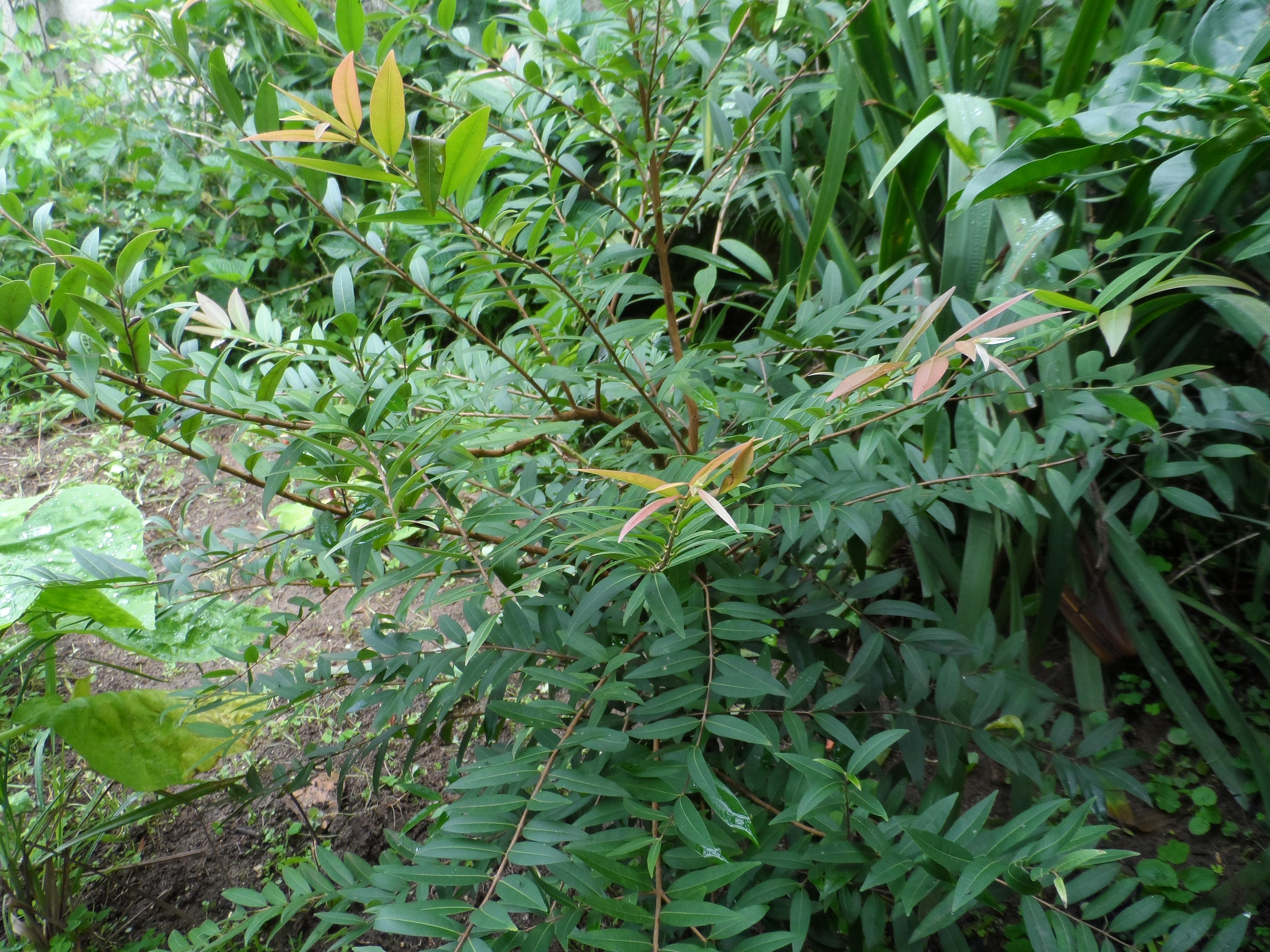 meu quintal meu jardim : meu quintal meu jardim:FRUTAS DO MEU QUINTAL